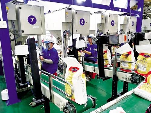 Khâu đóng bao bì gạo xuất khẩu của Công ty Cổ phần Nông nghiệp công nghệ cao Trung An