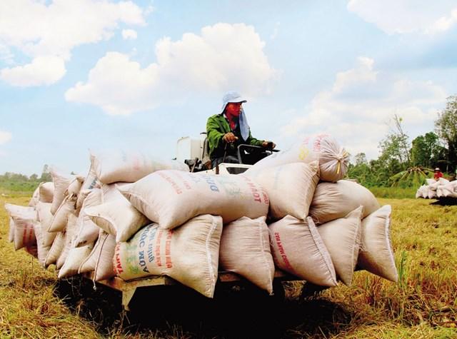 """Thu hoạch lúa tại một """"Cánh đồng lớn"""" trên địa bàn TP Cần Thơ"""