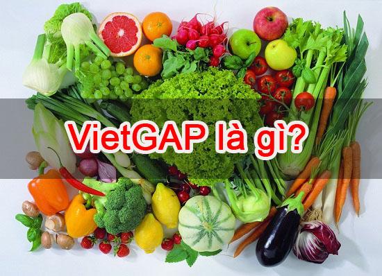 VietGAP là gì?